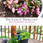 1-Backyard Plants-2
