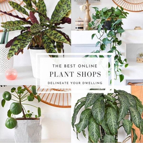 Best Online Plant Shops for Indoor Houseplants