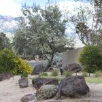 1-Desert Landscape Plan