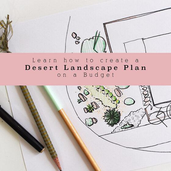 Create a Desert Landscape Plan on a Budget