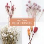 1-Dried Flowers