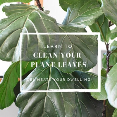 1-Dust Plant Leaves