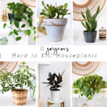 1-Hard to Kill Houseplants