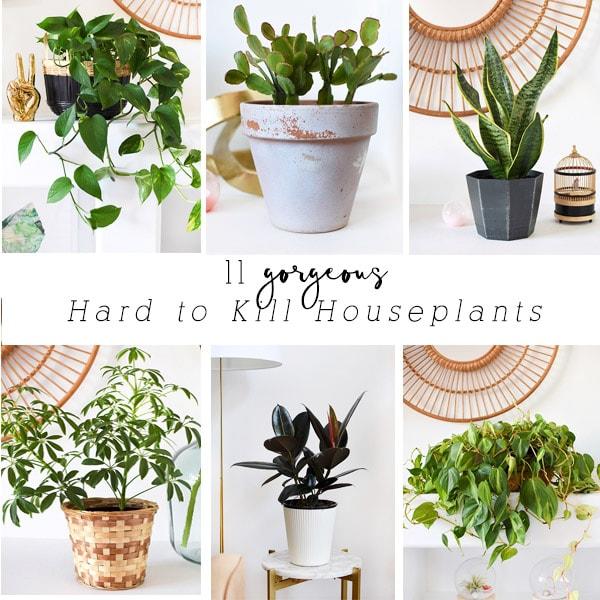 11 Hard to Kill Houseplants
