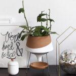 1-Indoor HousePlant Lighting Needs