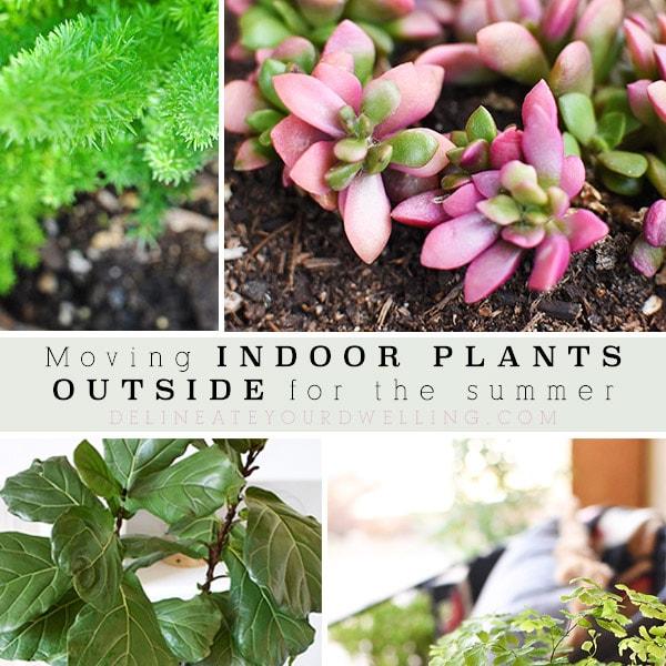 1-Indoor Plants Outside