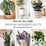 1-Low Light Plants