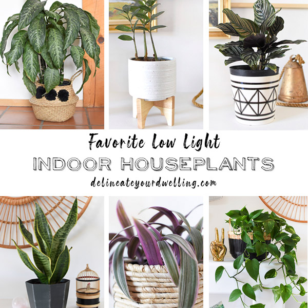 12 of my Favorite Low Light Houseplants