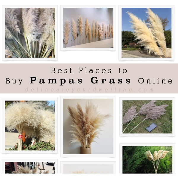Best Places to Buy Pampas Grass Online