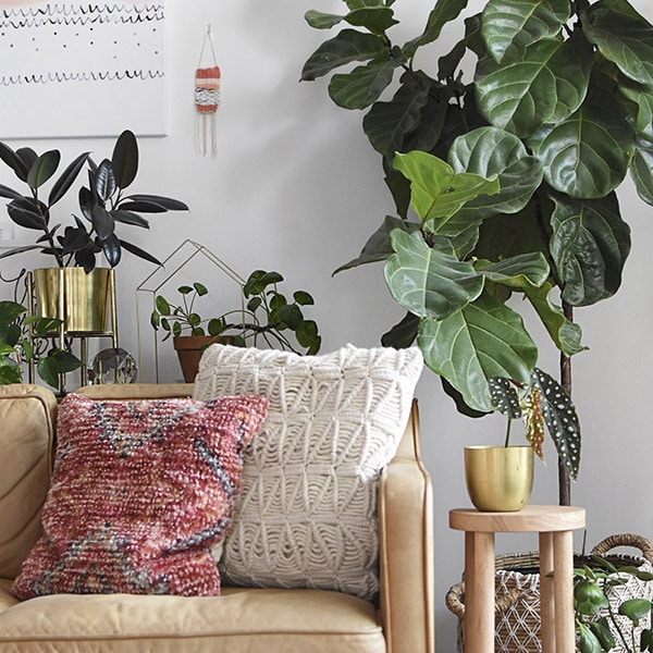 Glossary of Important Indoor Houseplant Words