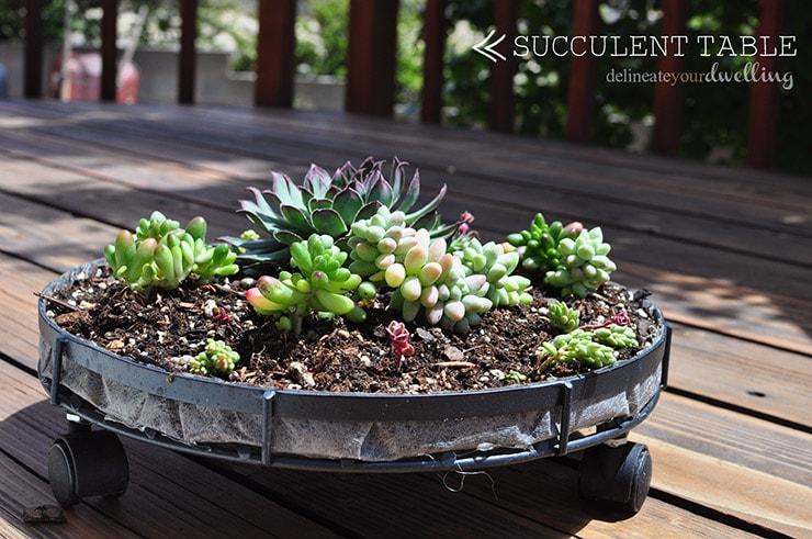 Succulent Table setup