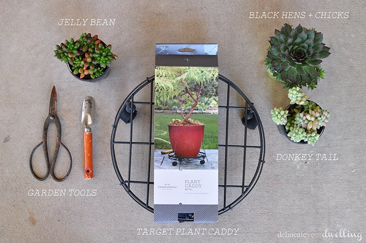 Succulent Table supplies
