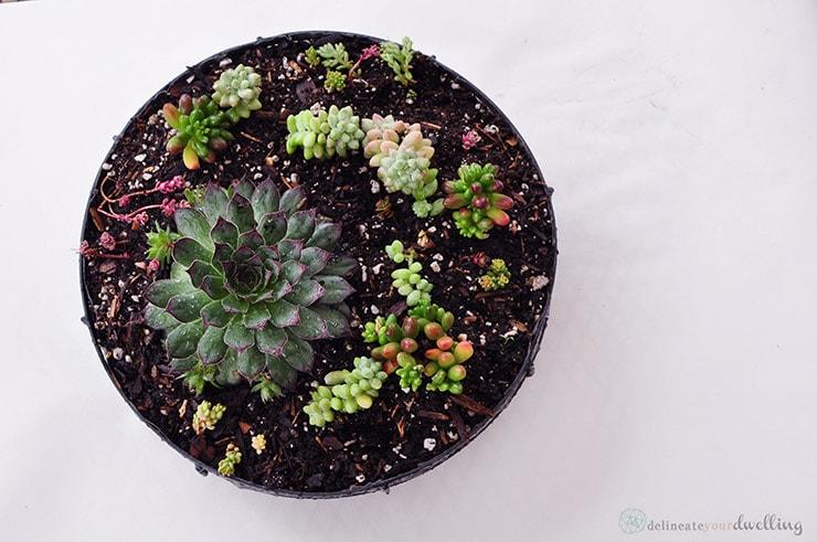 Succulents + Cactus table