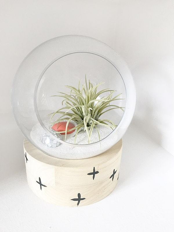 Tips for growing, watering and keeping Air Plants alive! Delineate Your Dwelling