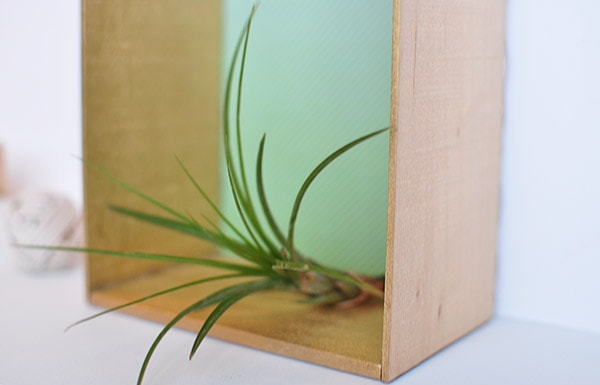 Balsa Wood House airplants