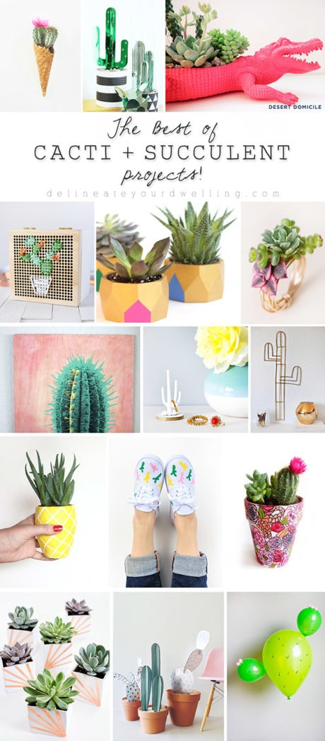 Best of Cacti and Succulent