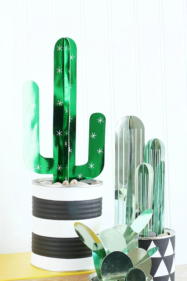 DIY-Cactus-Plants, Best of Cacti and Succulent