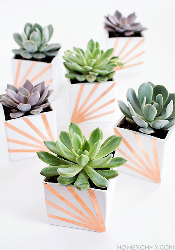 DIY-Copper-and-White-Succulent-Planters, Best of Cacti and Succulent