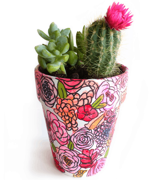 Painted Planter, Best of Cacti and Succulent