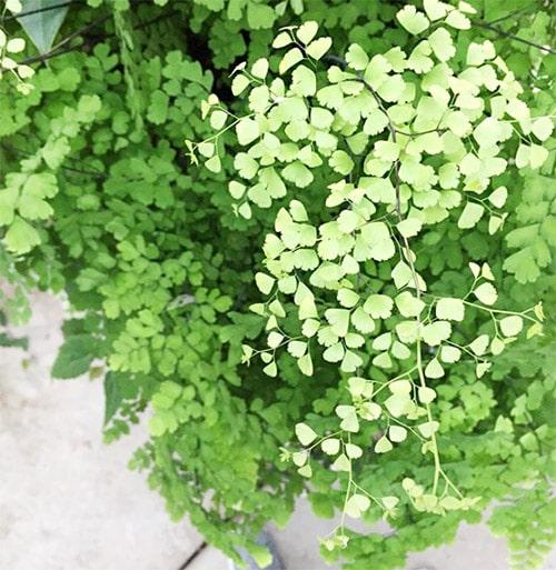 Flower Love 11 Fern