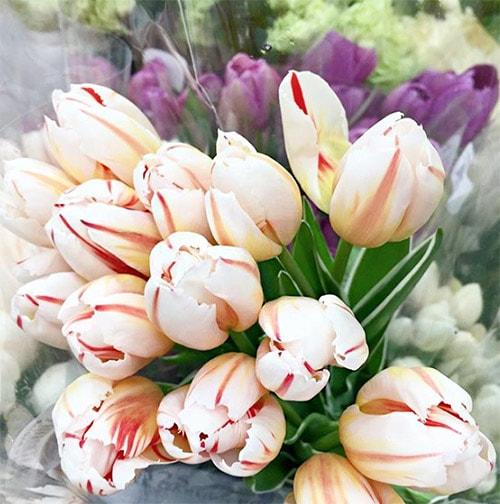 Flower Love 5 Tulips