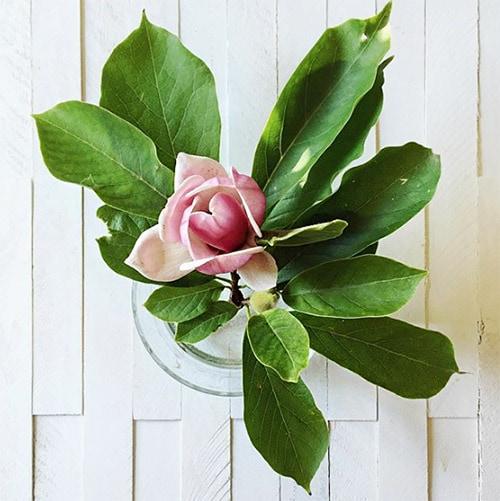 Flower Love 7 Magnolia