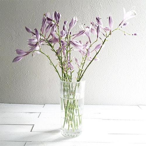 Flower Love 9 Iris