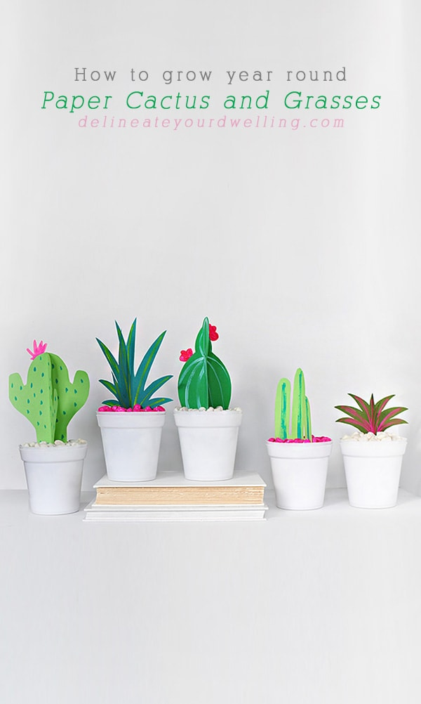 How to grow year round DIY Paper Cactus and Grasses, Delineate Your Dwelling