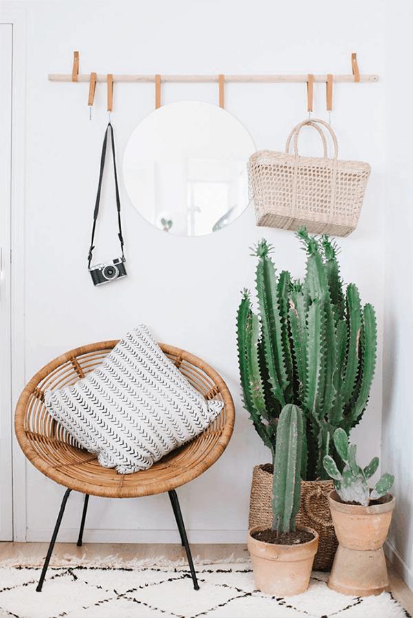Casual Cactus