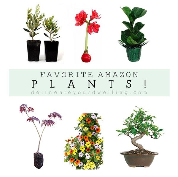 1 My Favorite Amazon Plants