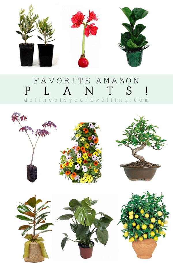 My Favorite Amazon Plants, Delineate Your Dwelling