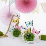 1 Butterfly Terrarium 1