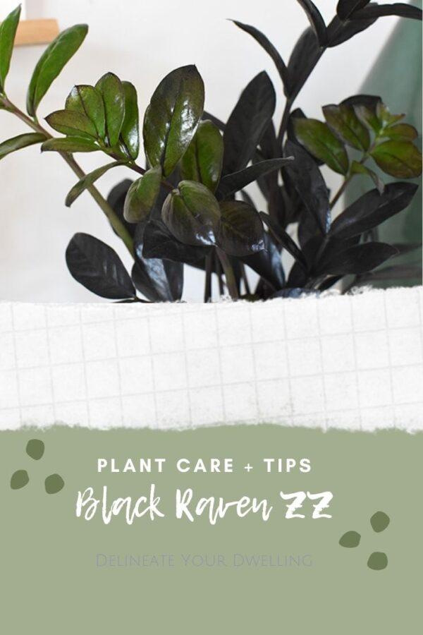 Dark Black leaves