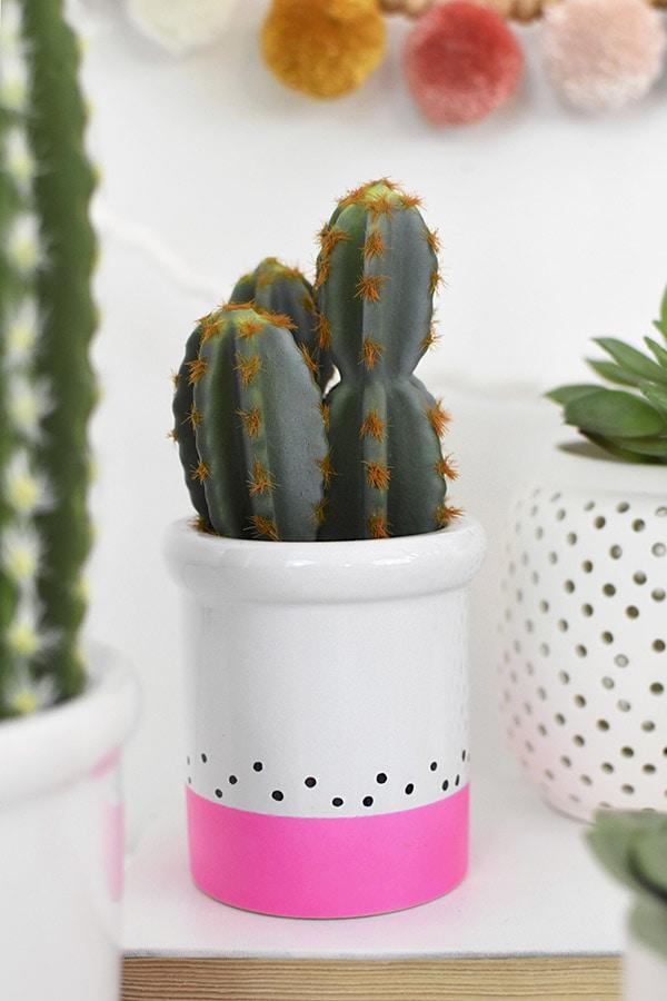 Color Block Cactus, pink and polka dots