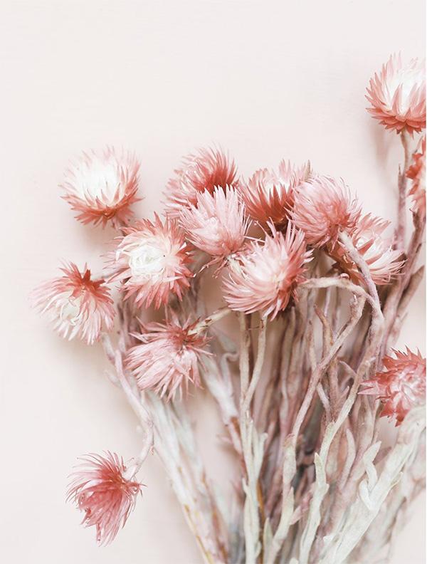 Blush Dried Flowers