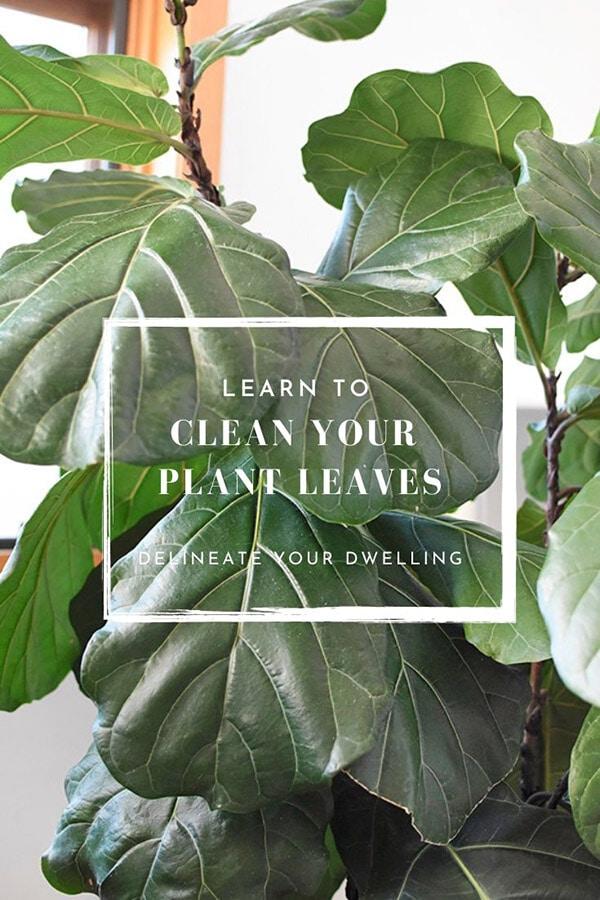 Dust Plant Leaves