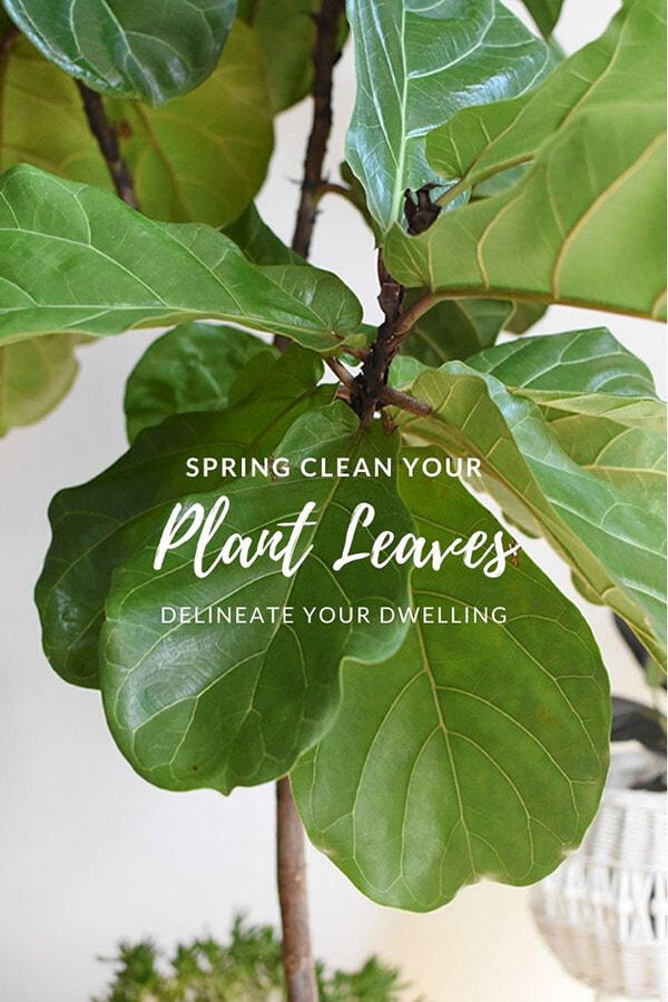 Spring Cleaning, Dusting your Plant Leaves