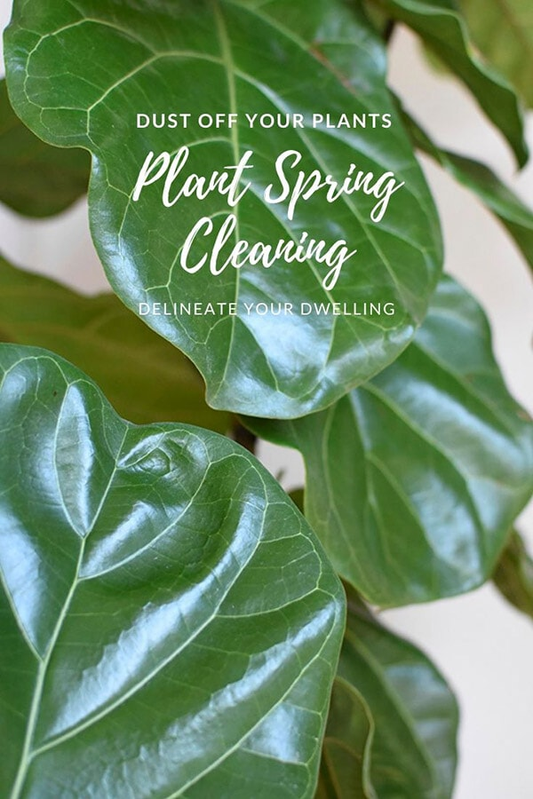 Dusting your Plant Leaves