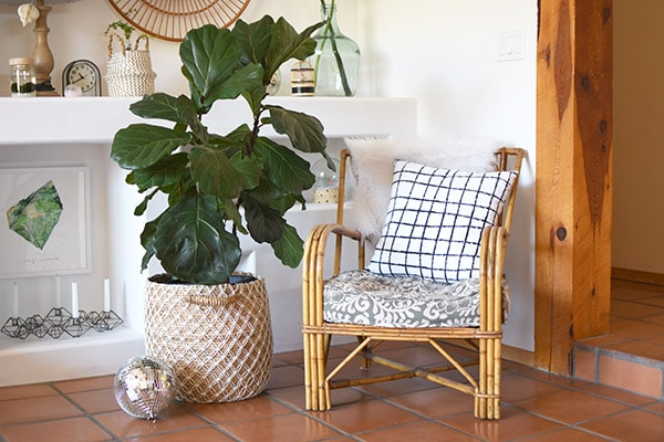 Fiddle Fig Chair