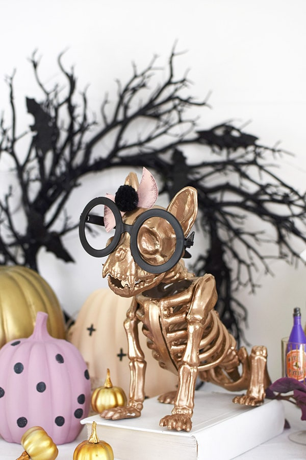Cutest Halloween Gold French Bull Dog Skeleton