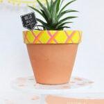 Grow a Pineapple