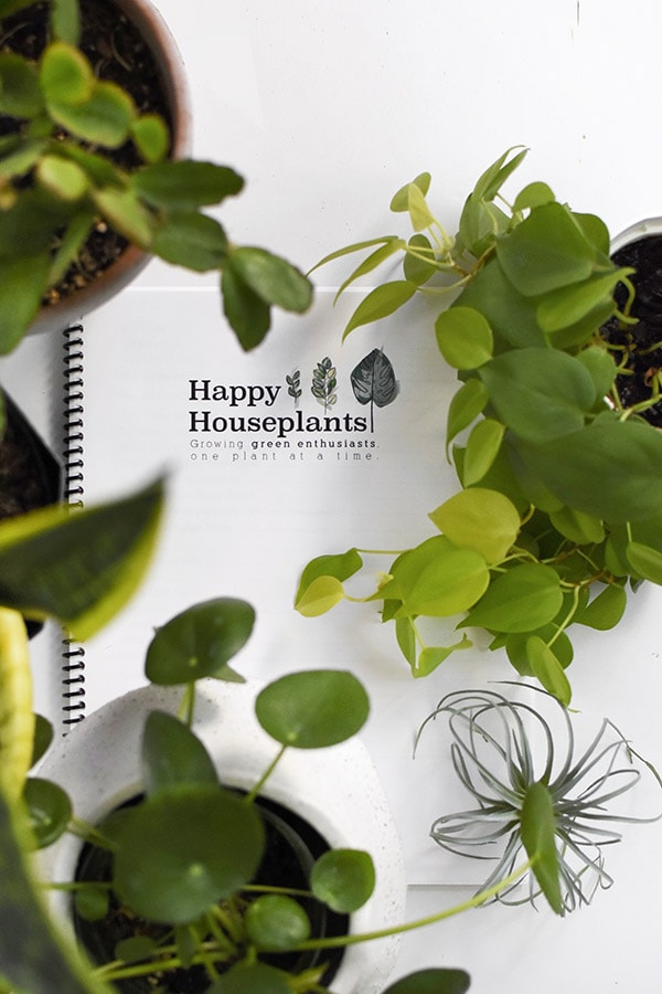 Pothos, Air Plants, Pilea Happy Houseplants ebook