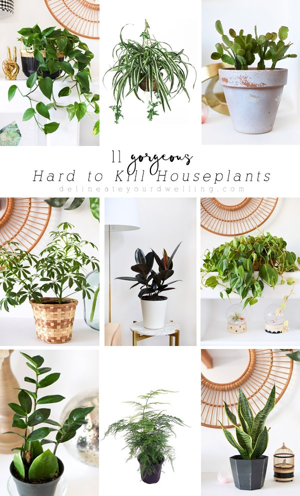 11 Gorgeous Hard to Kill Houseplants