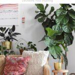Houseplant Glossary