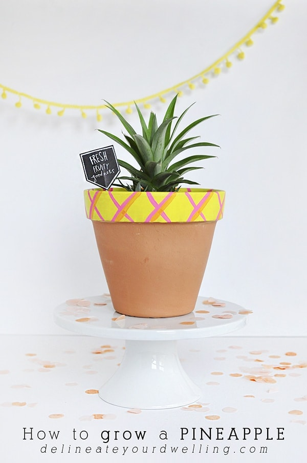 It is so much easier than you think to grow a pineapple plant!  See my tips growing a pineapple from an existing fruit. Delineate Your Dwelling #pineappleplant