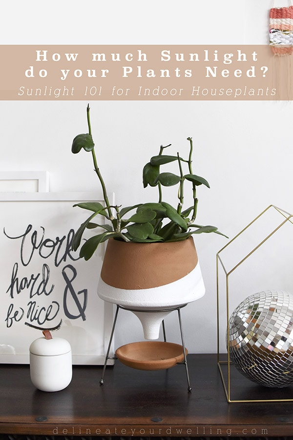 Indoor HousePlant Lighting Needs