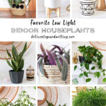 Low-Light-Plants