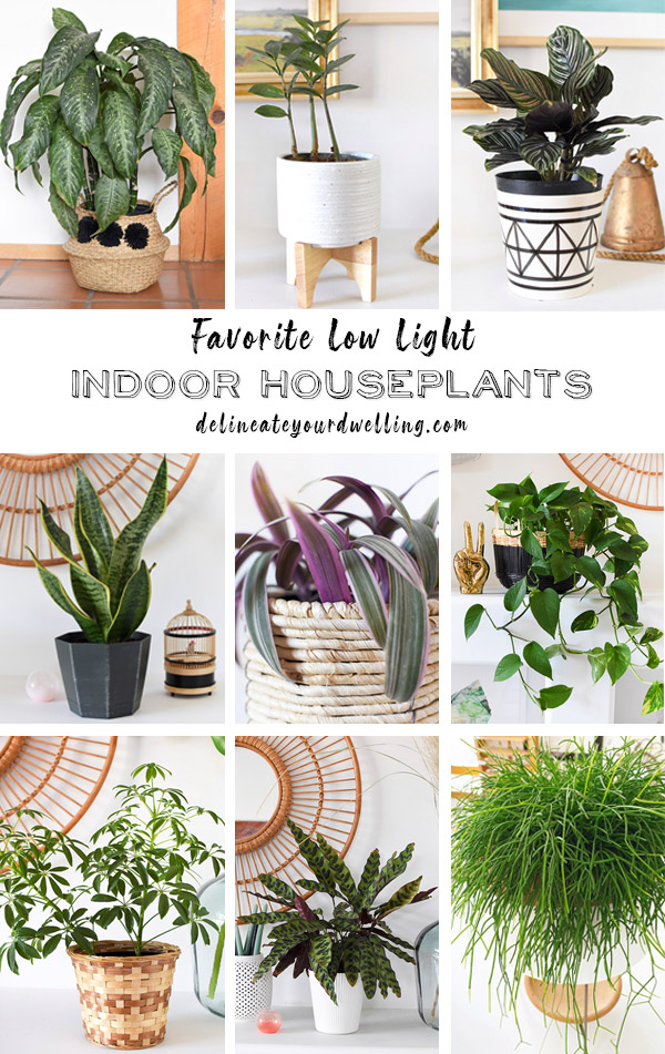 Favorite Low Light Indoor Houseplants