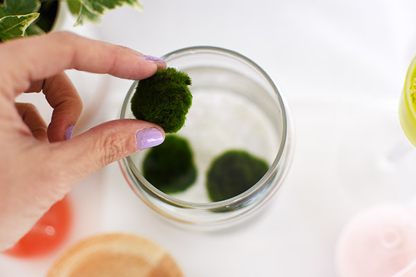 Marimo Moss Ball jar