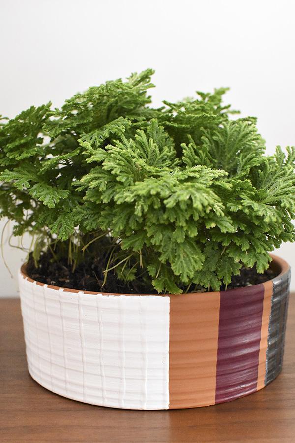 Modern Pot